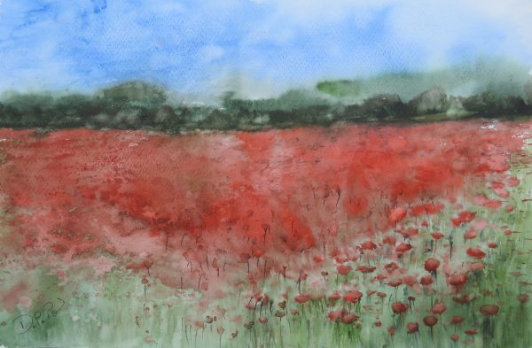 Paysage champs coquelicots