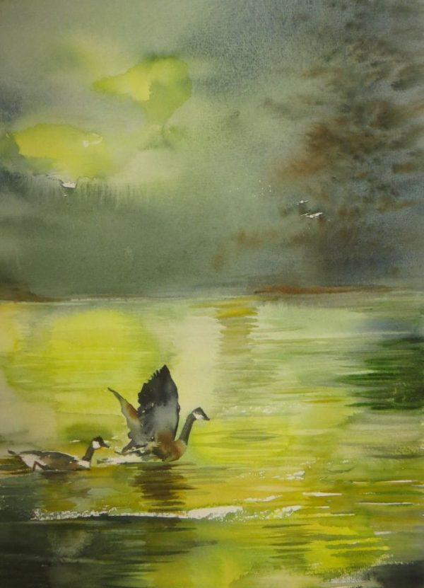 Canard battant des ailes dans le lac