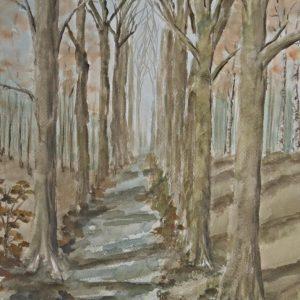 Chemin entre des arbres à Tervuren