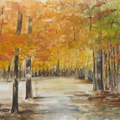 2019 Feuilles d'automne - Bladeren van de Herfst